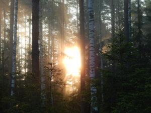 Metsän Woima Kiertotalous